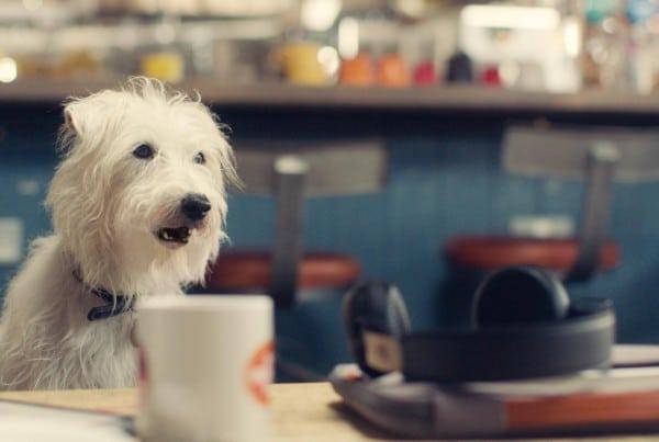 Talking-animal-VFX-header_01